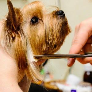 Стрижка, тримминг собак