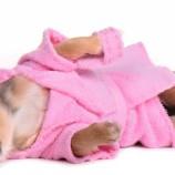 Стрижка собак и кошек. Зоостудия «Mon Ami» - +7 (499) 390-2251