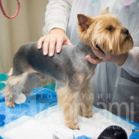 Осмотр состояния здоровья собаки перед чисткой зубов.