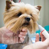 Проверка реакции собаки на ультразвуковой скалер.