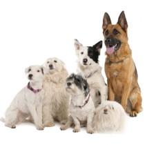 Собаки других пород