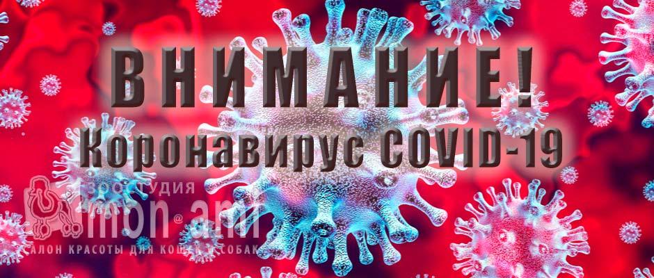 Внимание Коронавирус COVID-19